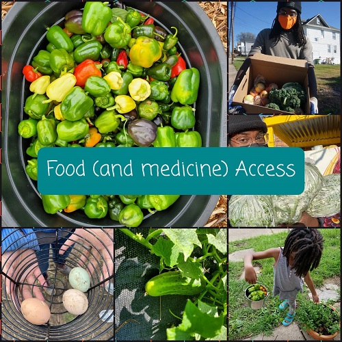 A collage of photos showing vegetables and eggs produced on a small farm.
